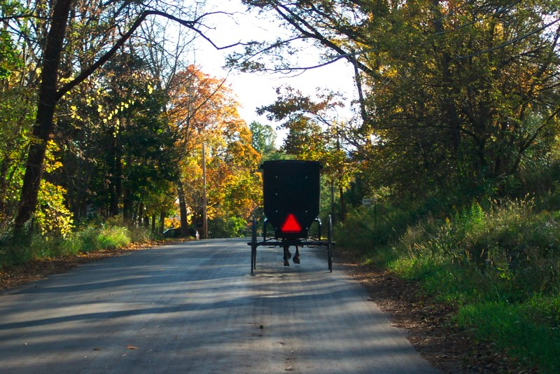 Amish Buggy heading down the road